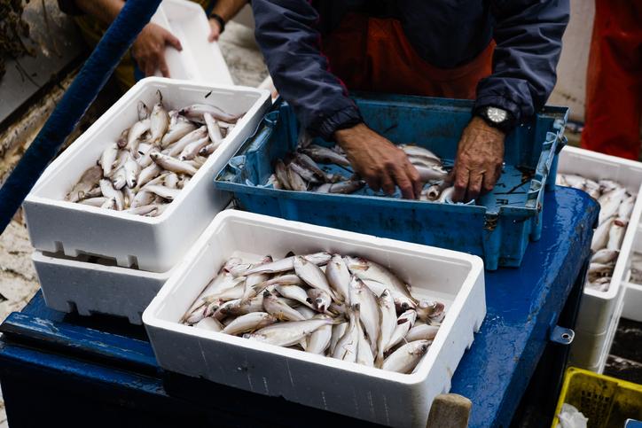Photo La pêche